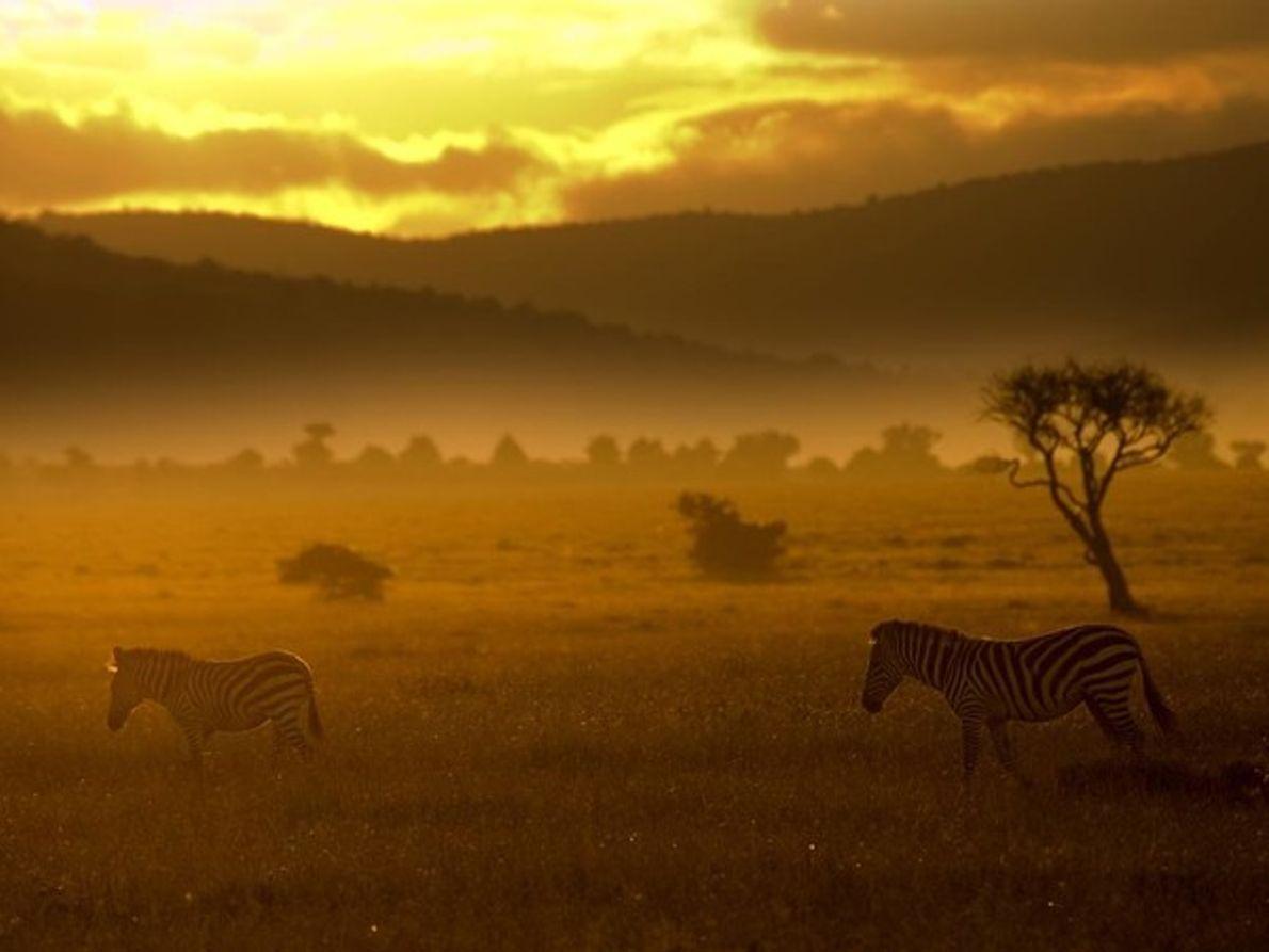 Llanura de Kenia