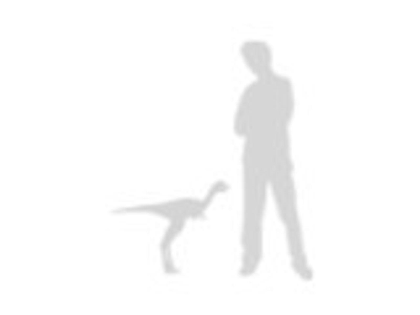 Gran Diversión Imán Flexible 6 X 4 Labrador Negro Regalo de Perro de laboratorio reglas de propiedad