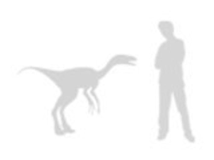 Troodon formosus en comparación con el Hombre
