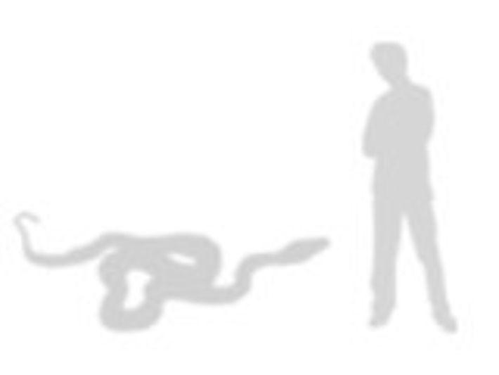 comparación de la boa constrictor