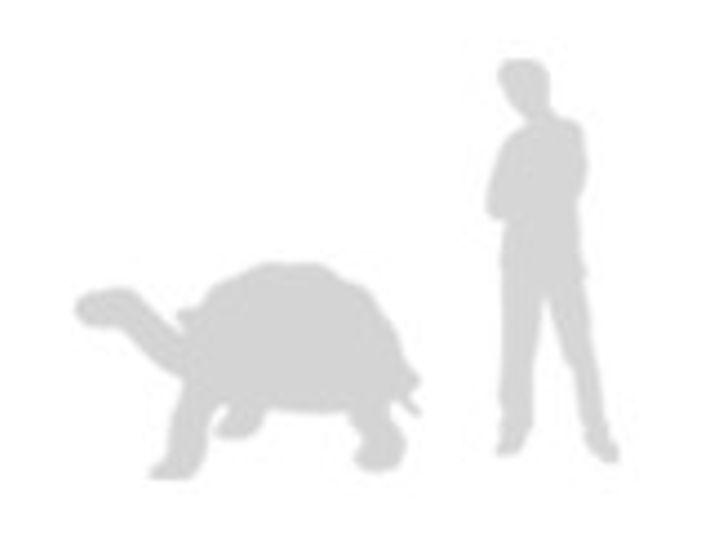 comparación de la tortuga de las galápagos