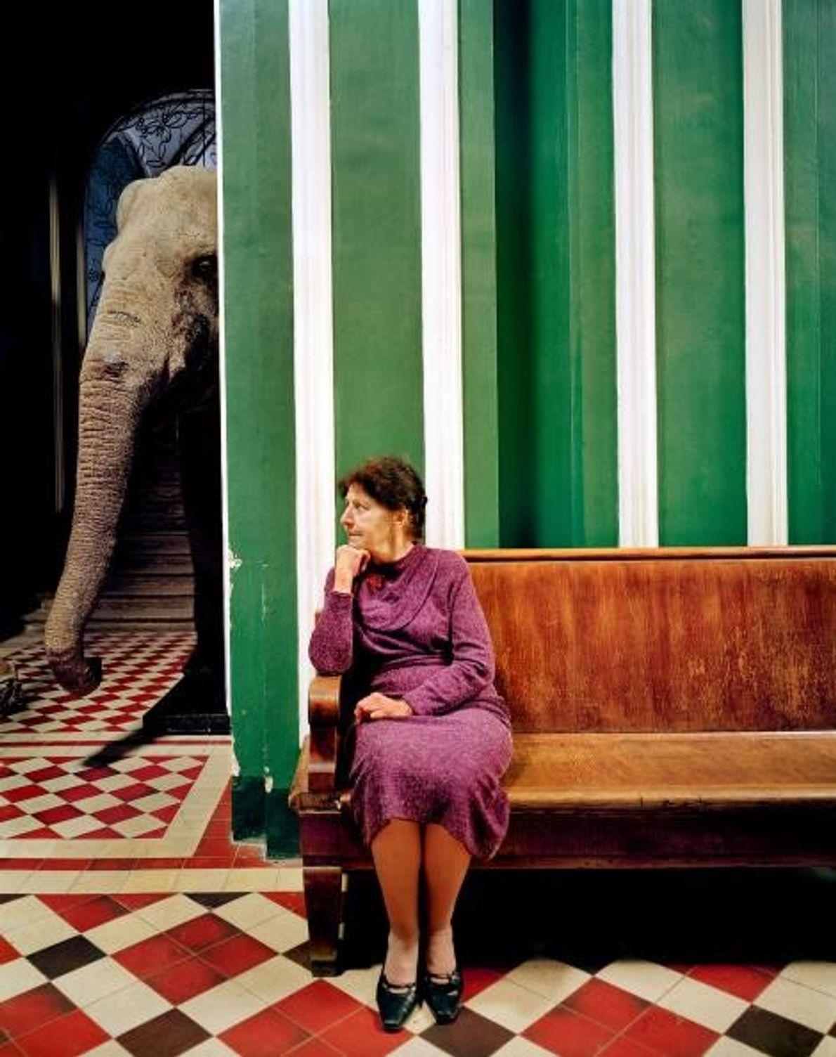 «Elefante I», 2005