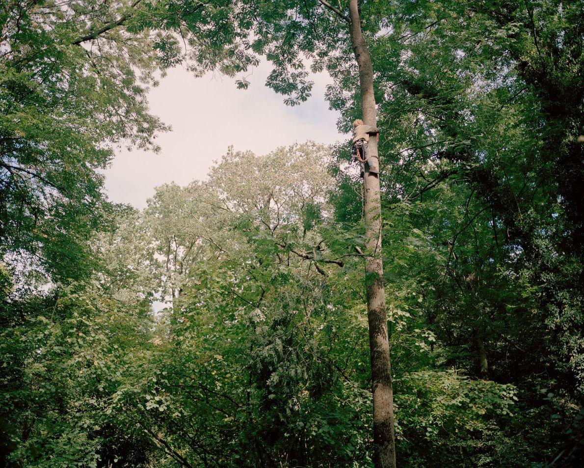 Un activista trepa a un árbol