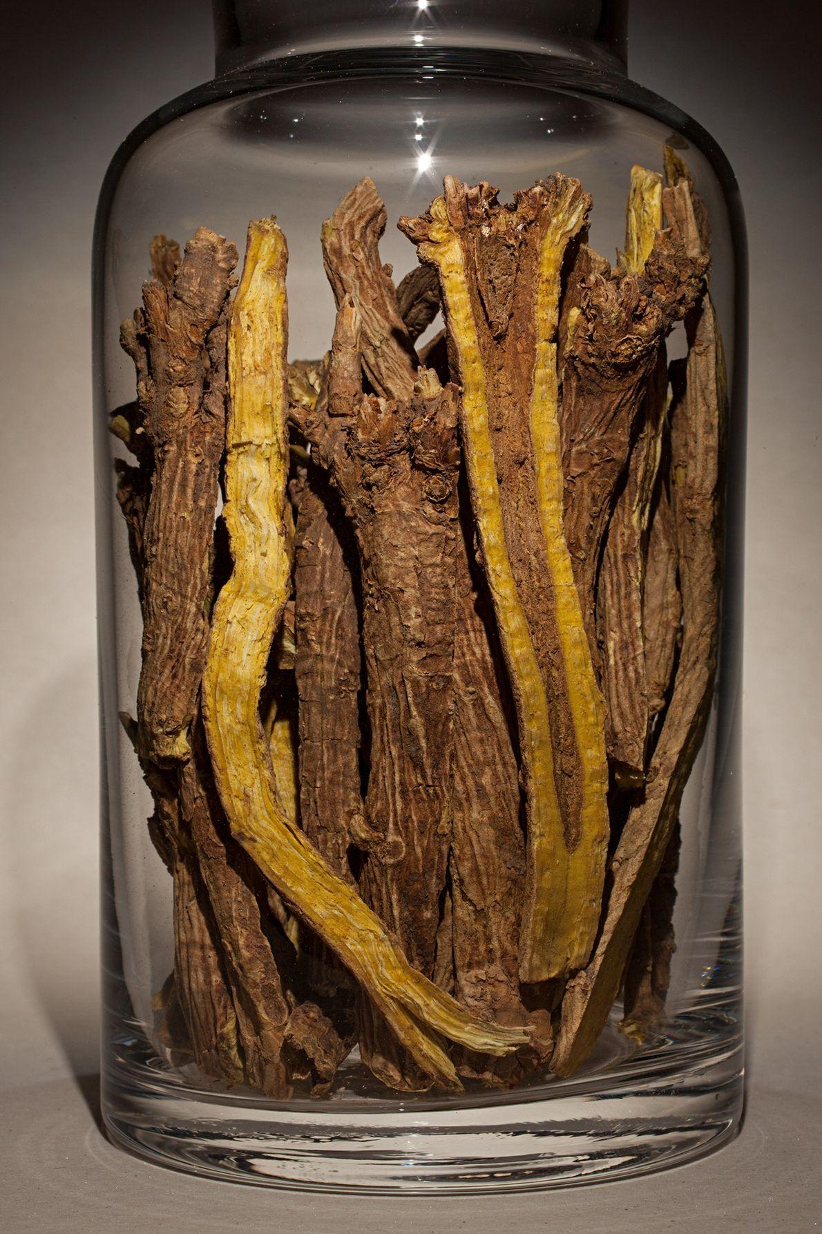Raíz de Scutellaria