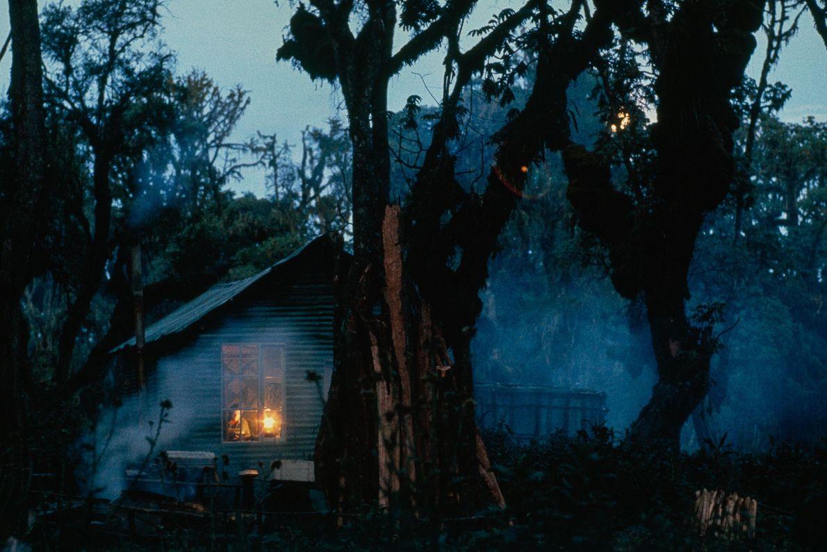 Fossey vivía sola