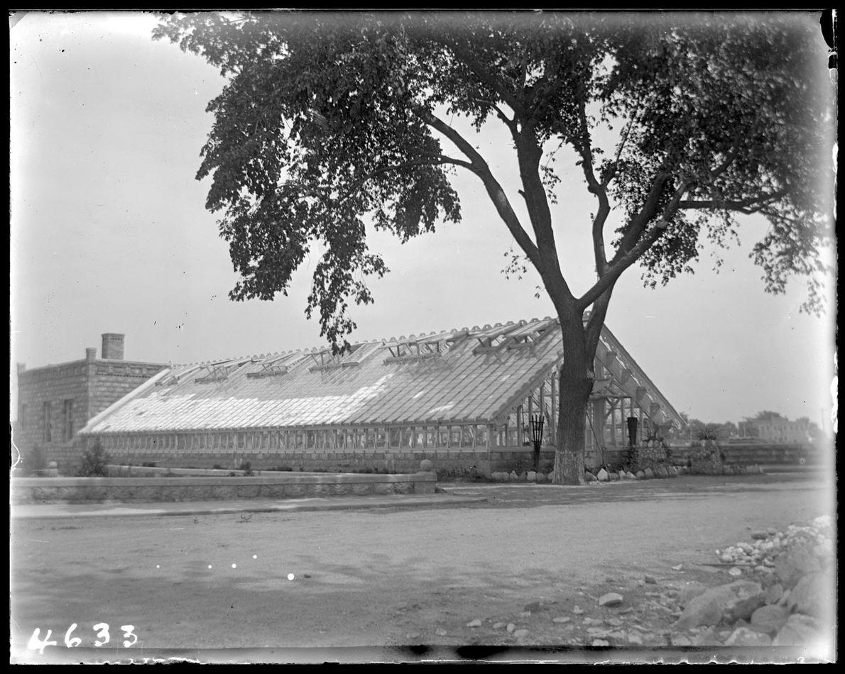 Árbol del reformatorio, Isla Hart