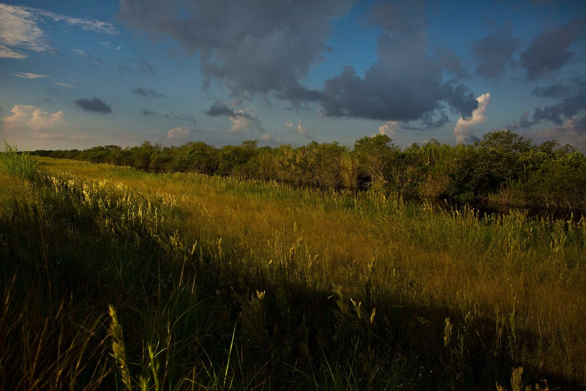 Parque nacional de los Everglades, Florida