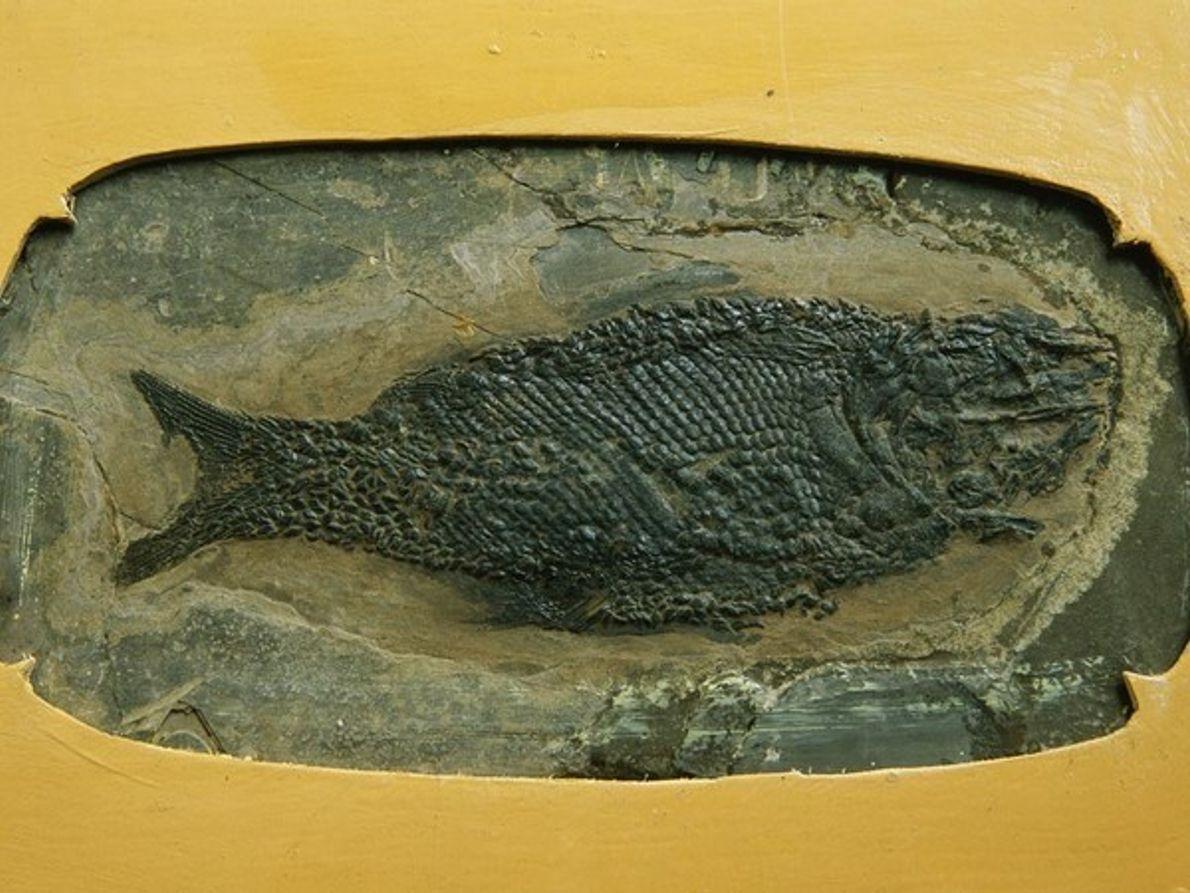 Pez del Triásico