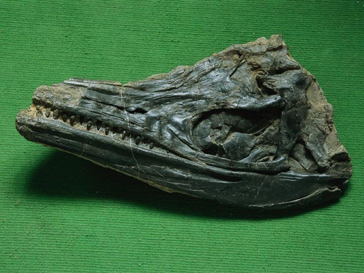 Primeros ictiosauros