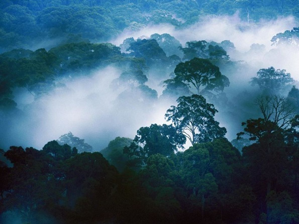 Valle de Danum, Borneo