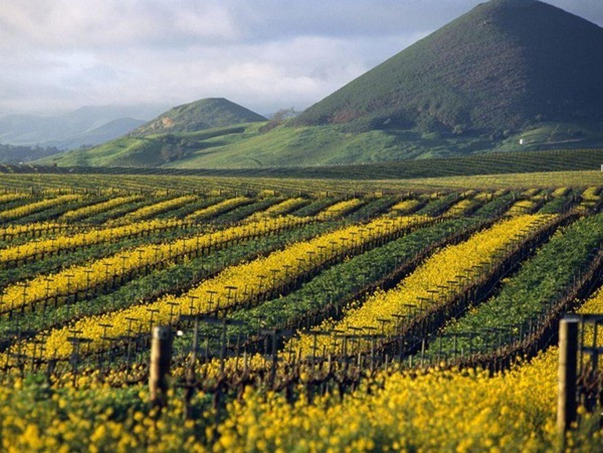 Valle Edna, California