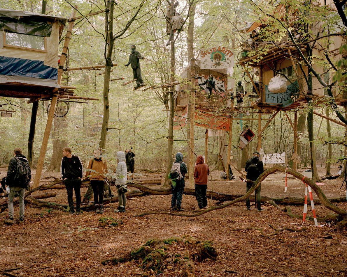 Casas árbol