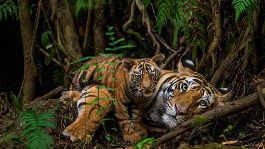 Las imágenes favoritas de vida salvaje de los fotógrafos de National Geographic