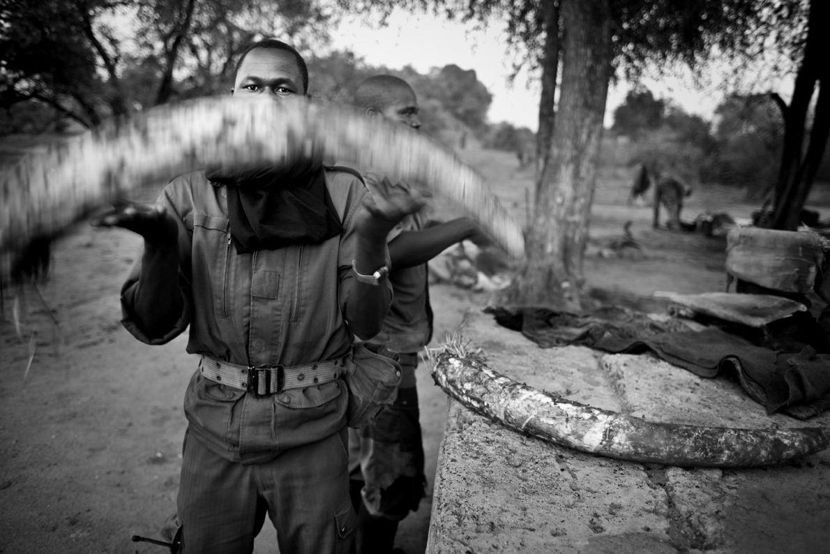 Anti caza furtiva