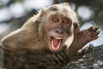 Un mono expresivo