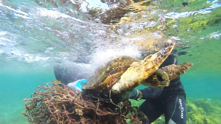 Rescate de una Tortuga marina atrapada en una red