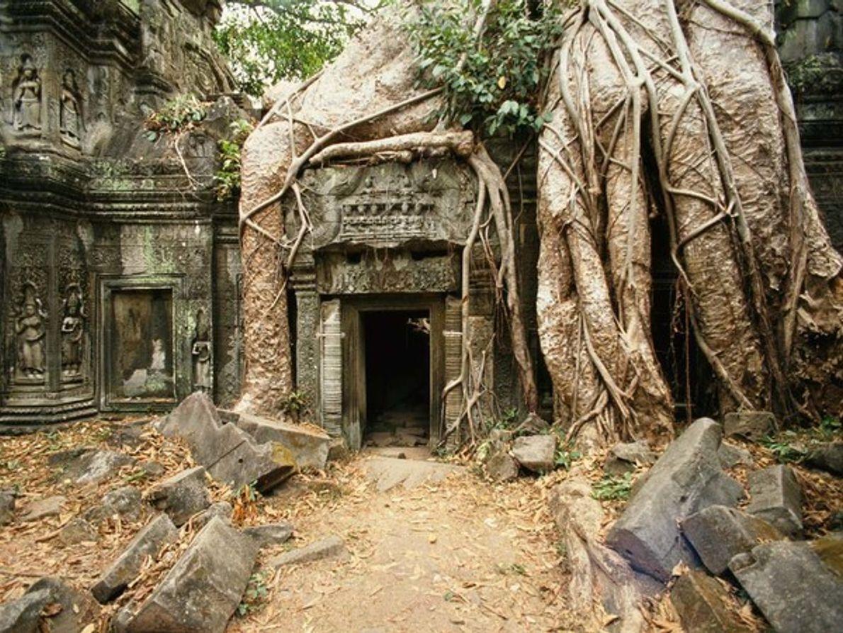 Templo Ta Prohm, Angkor Wat