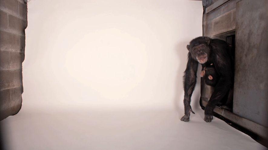 La complicada misión de este fotógrafo: retratar a 12.000 animales