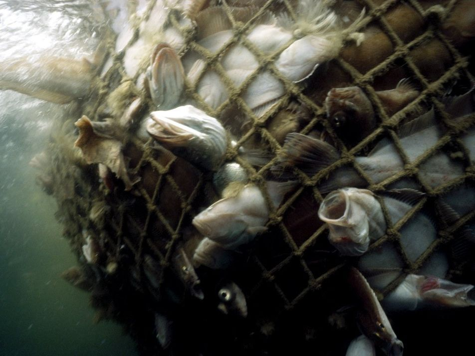 La sobrepesca vacía nuestros mares