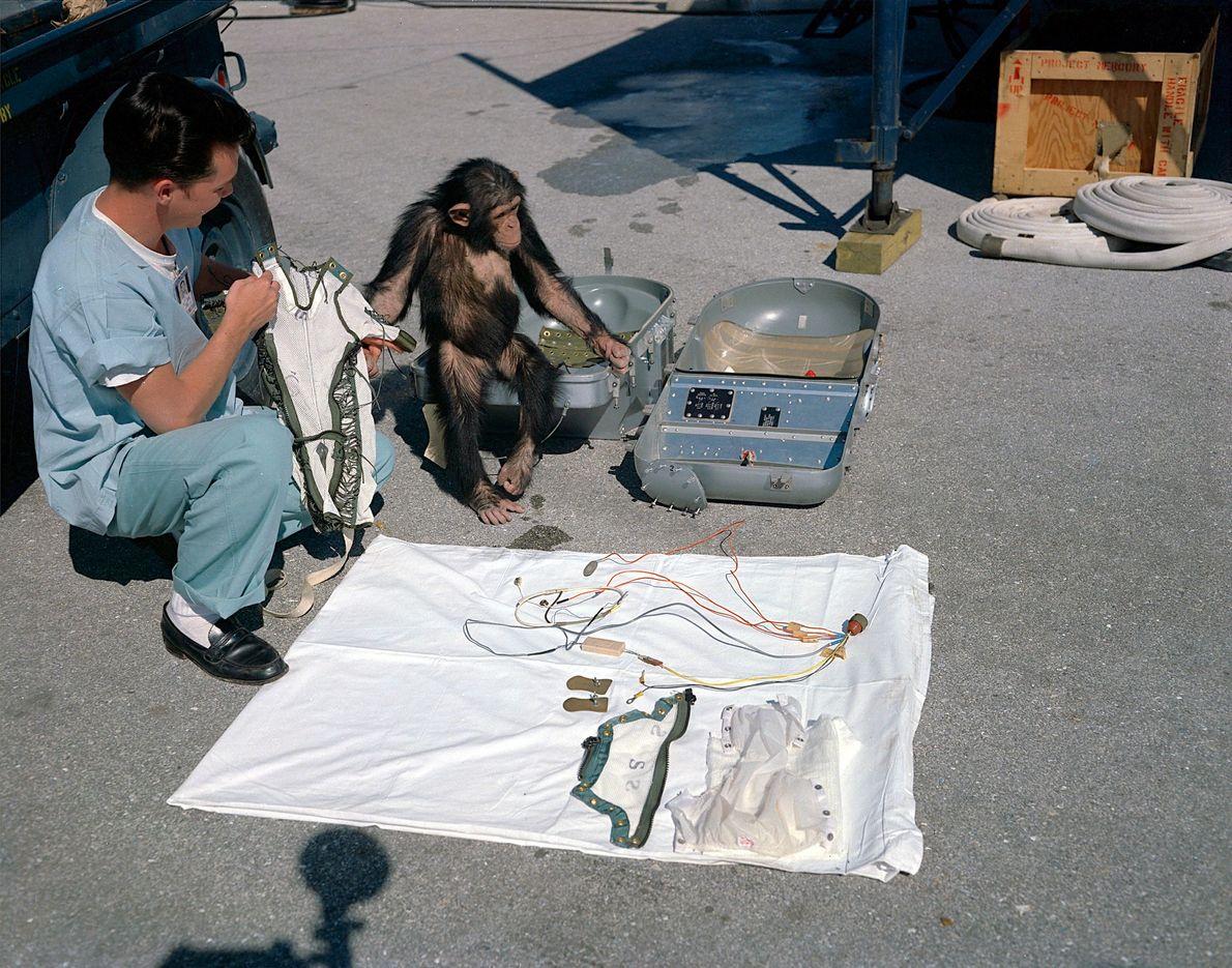 El chimpancé astronauta Ham