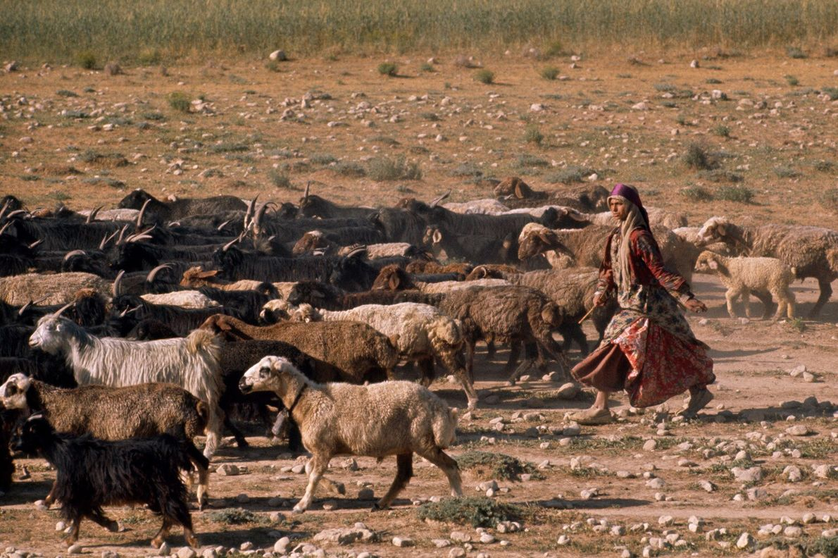 Una niña kashgai