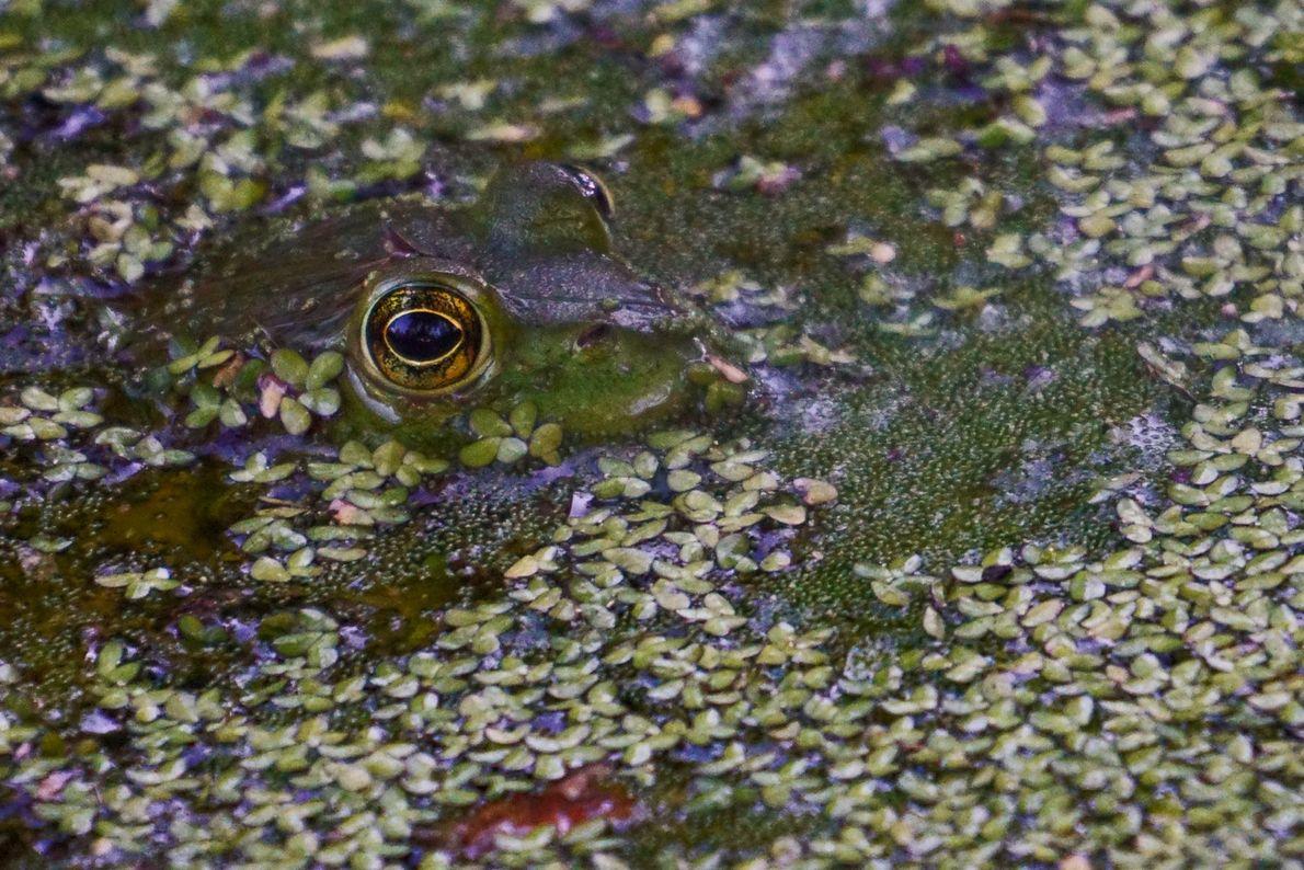 Frog. Washington D.C., United States