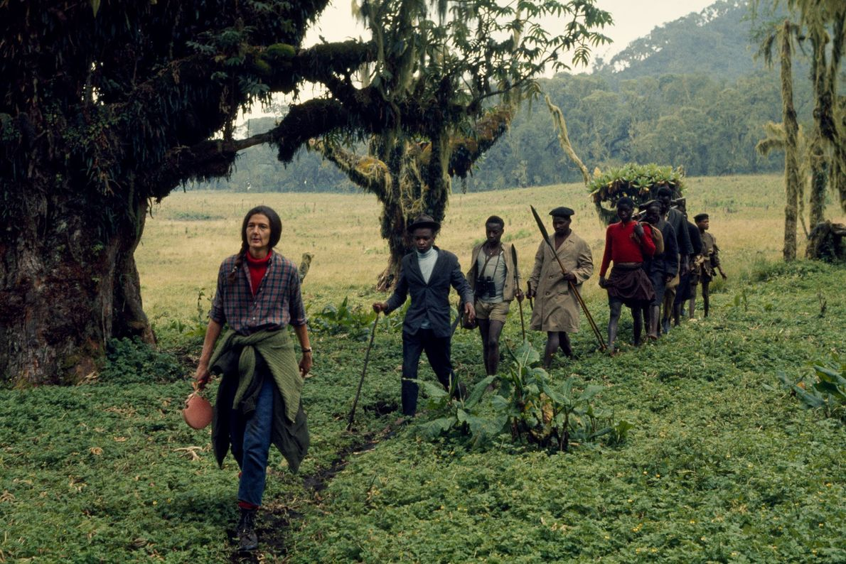 Fossey con pastores