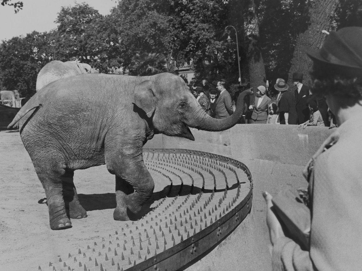 Un elefante del zoo de Berlín