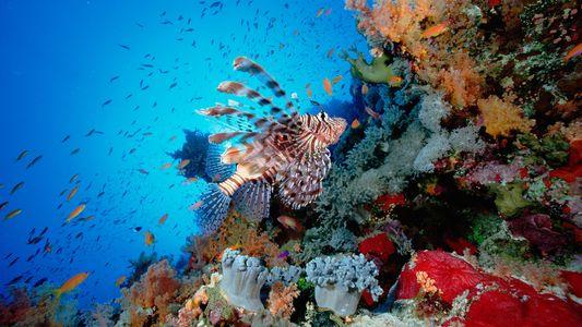 Los animales marinos que habitan un océano hostil