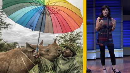 Retratando el regreso de los rinocerontes y los osos panda a la naturaleza
