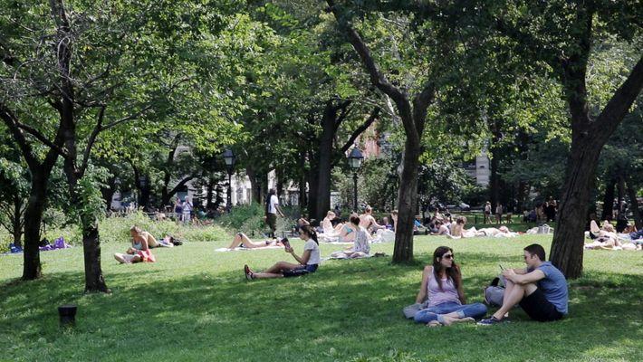 Experimenta la tranquilidad de Central Park