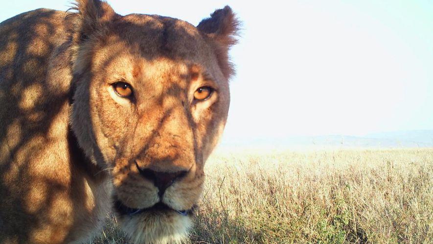 Los mejores selfies de animales del Serengueti