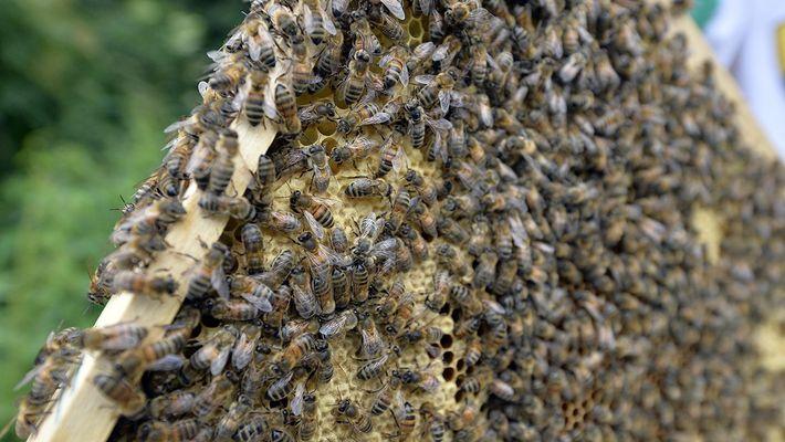¿Entrarías en una habitación con millones de abejas?