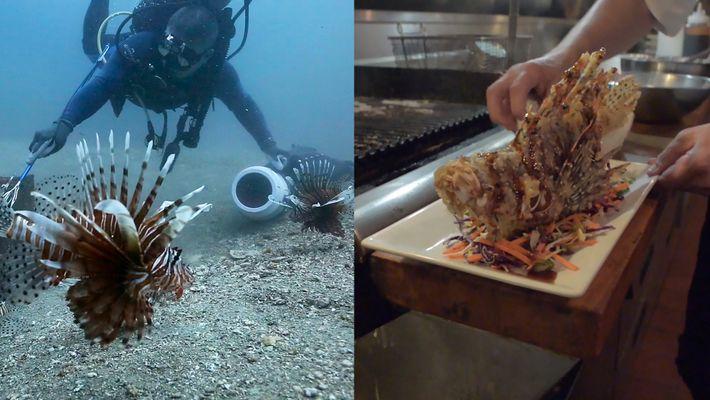 Comer pez león ayuda a conservar el medio ambiente