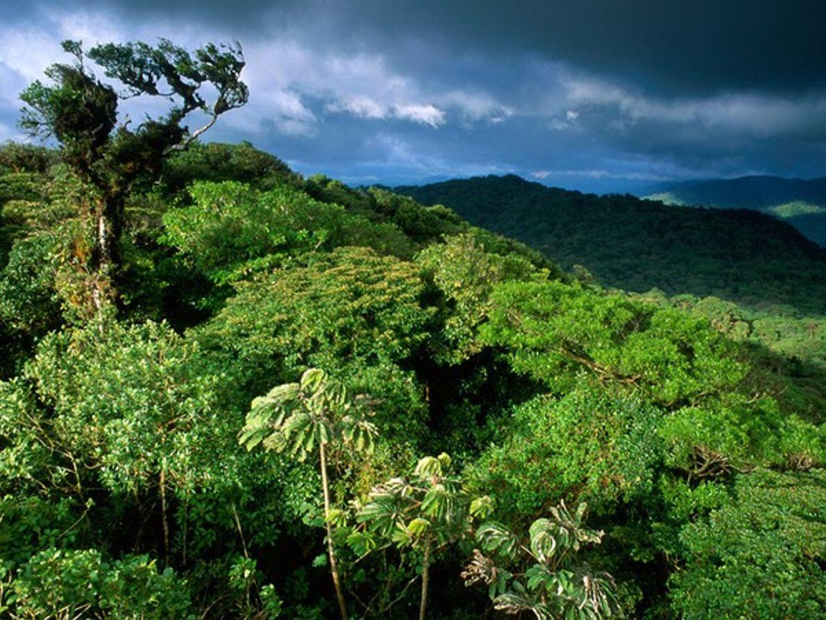 Reserva Forestal Bosque Nuboso de Santa Elena