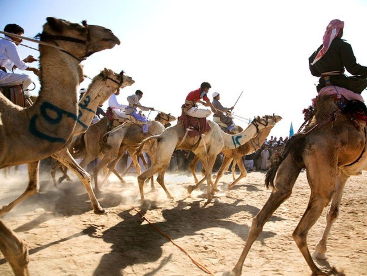 Carreras de camellos, península del Sinaí