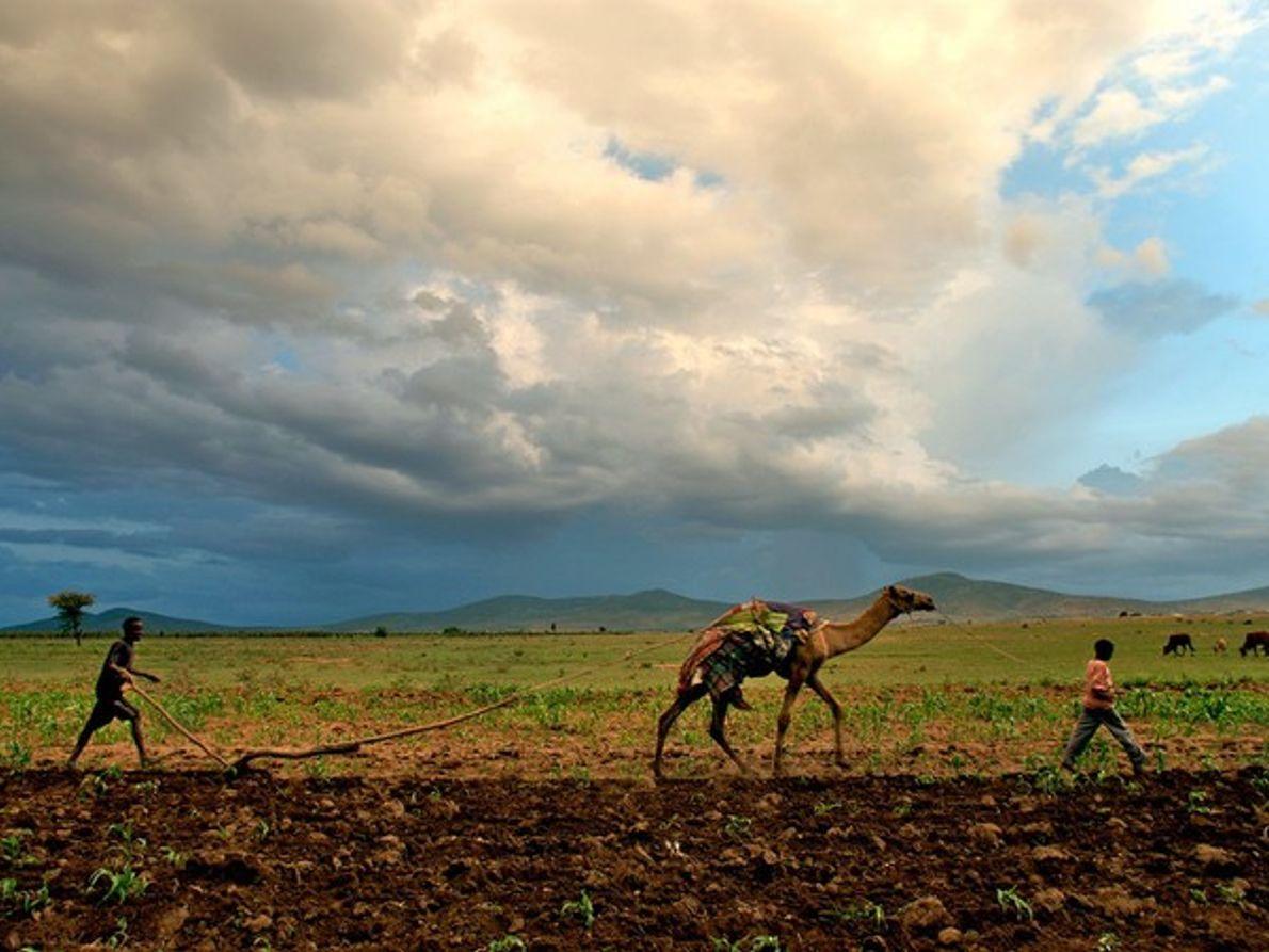 Granjeros con camello