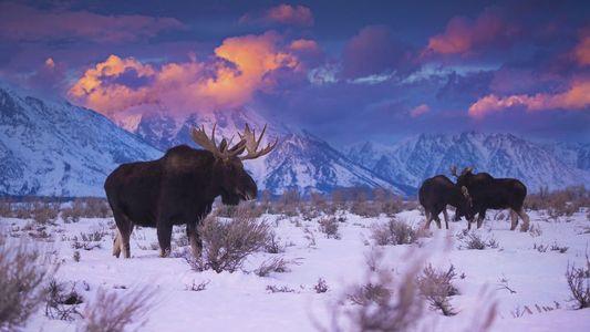 Aventuras en las Montañas Rocosas