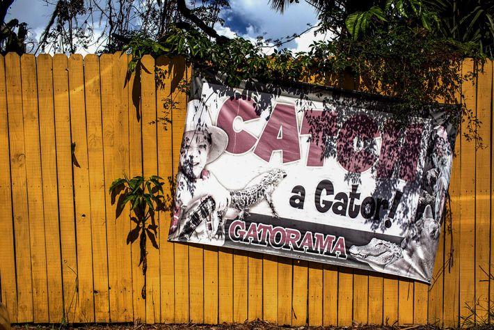 Gatorama