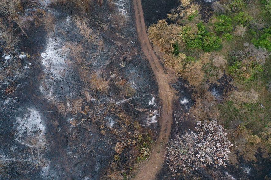 Una imagen aérea de limoneros arrasados en Roboré ilustra la escala de la destrucción.
