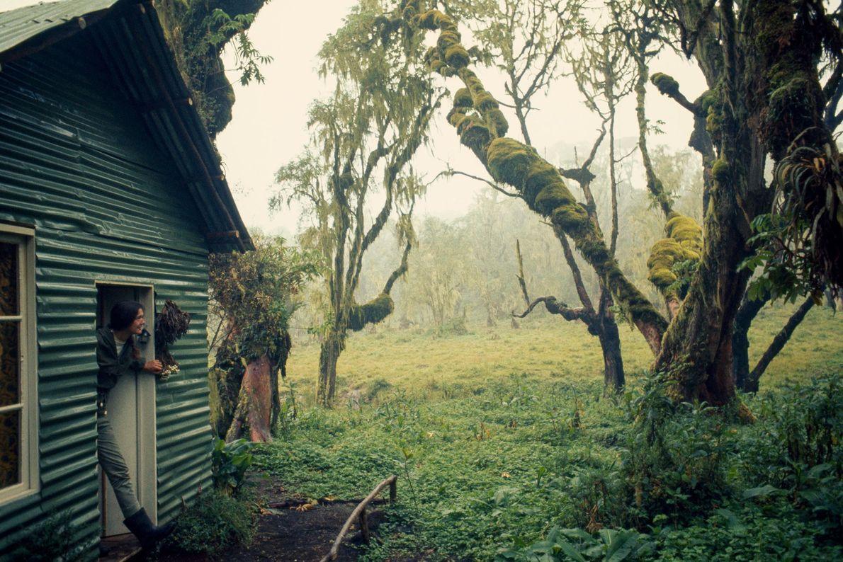 La puerta de la casa de Fossey