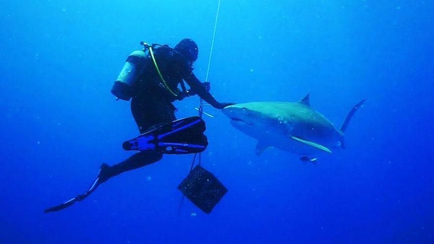 """Cómo un tiburón pasa rozando a unos buceadores en un encuentro """"mágico"""""""