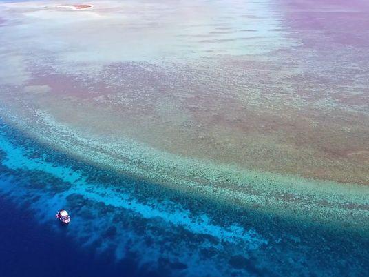 VÍDEO: visita uno de los pocos arrecifes de coral prístinos del mundo