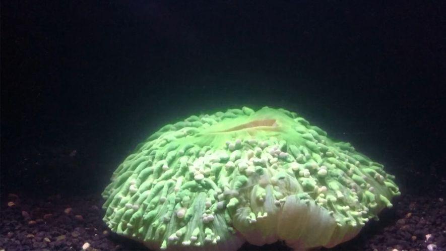 El calentamiento de los océanos ha disparado el blanqueo de los corales
