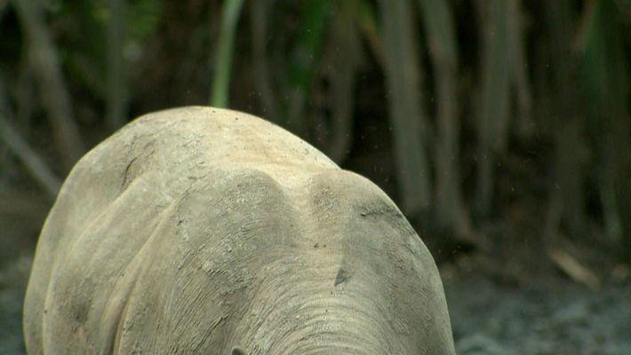 ¿Reconoces a este animal?
