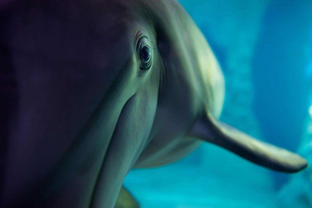 Imagen de un delfín en el acuario de Georgia