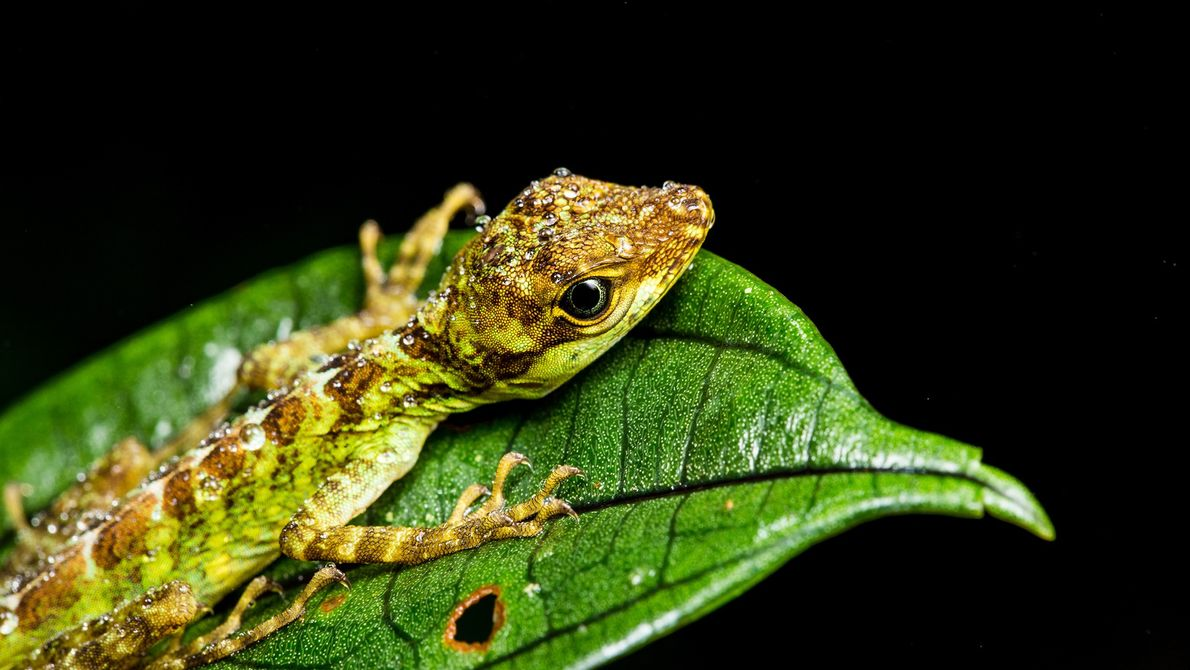 Imagen de un lagarto