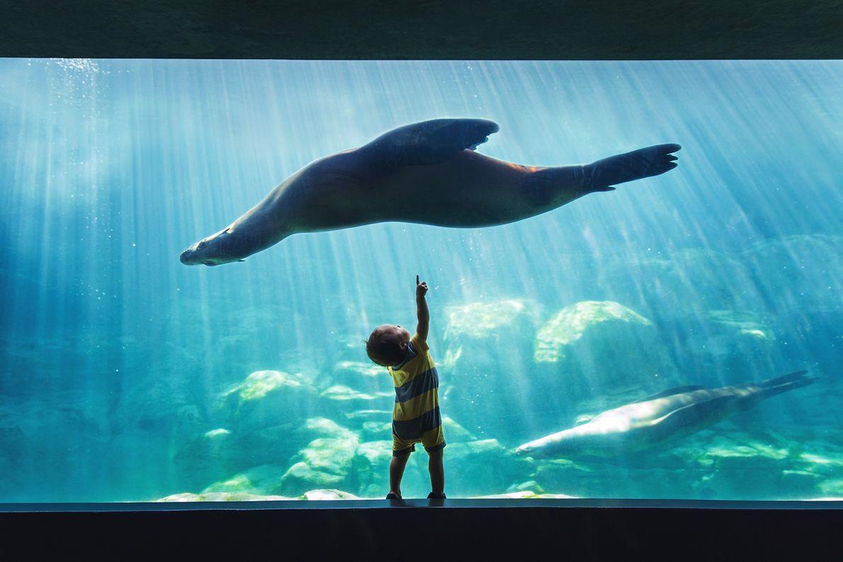 Imagen de un niño señalando a un león marino