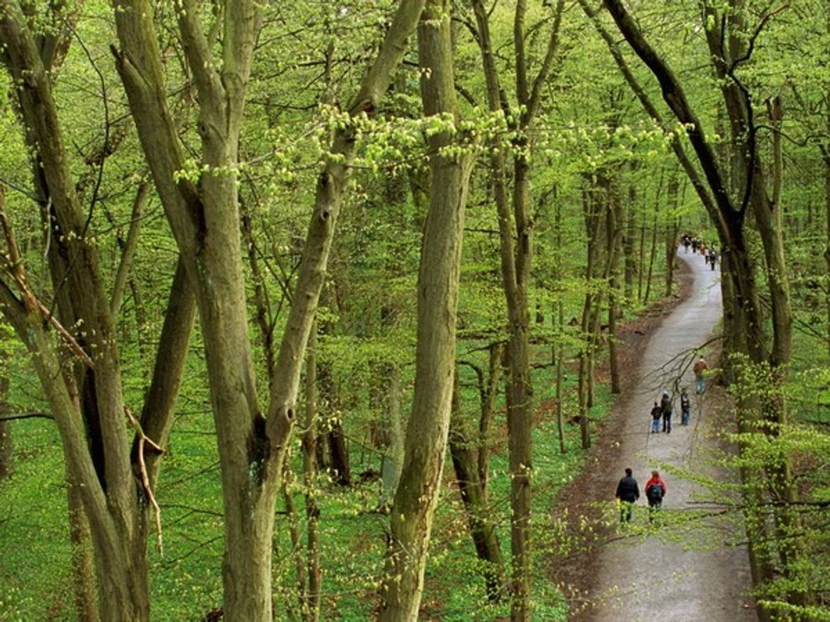 Parque Nacional de Hainich, Thüringen
