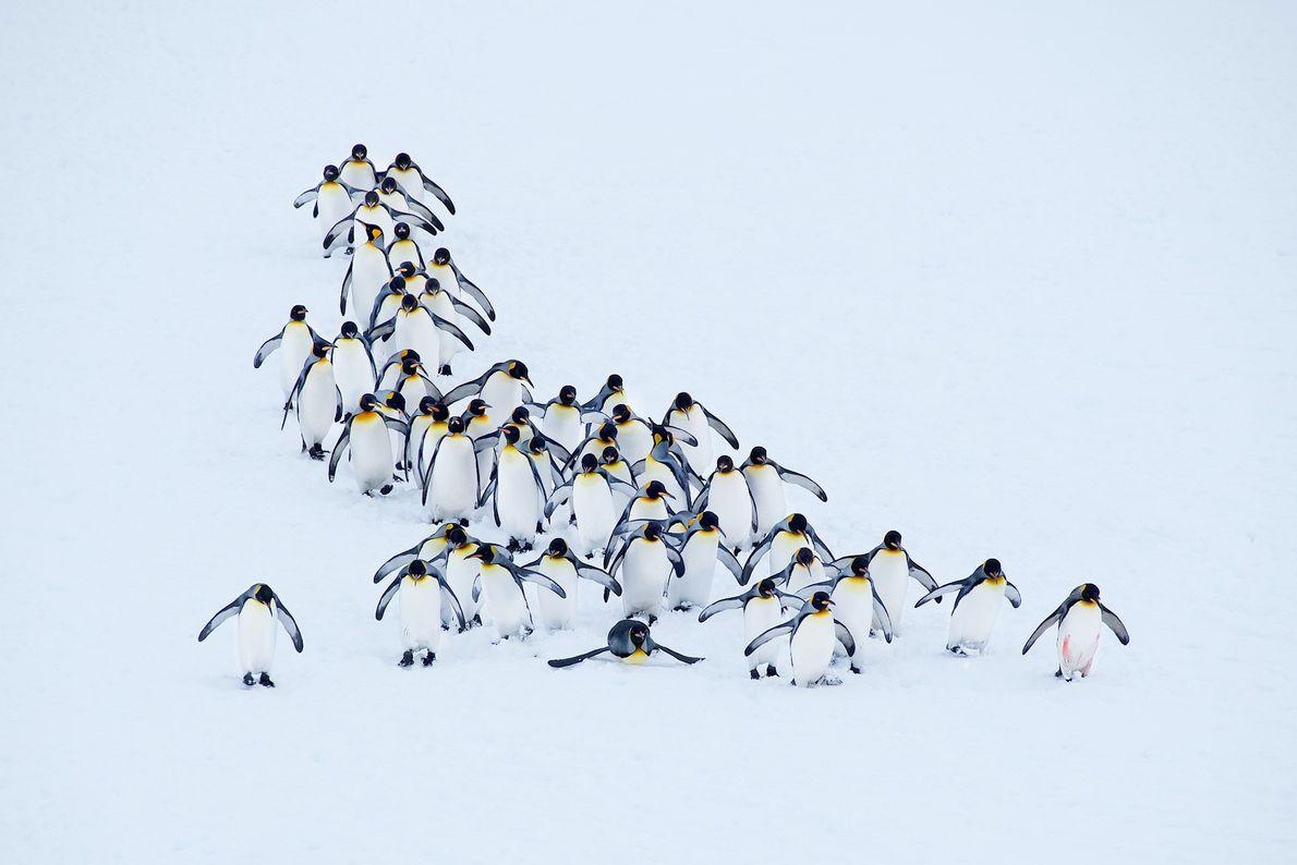 Imagen de pingüinos en las Islas Georgias del Sur